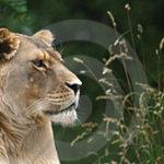 ライオンズゲートが開く日までアバンダンスのアチューメントをいたします。