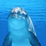イルカのエッセンスで遊ぼう♪